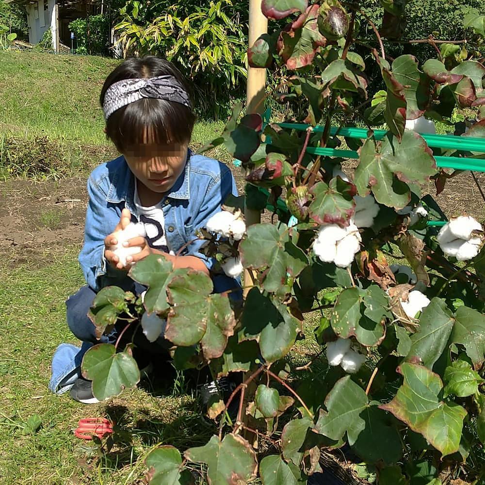 喜入の里山で綿花摘み・機織り・小物作り体験会