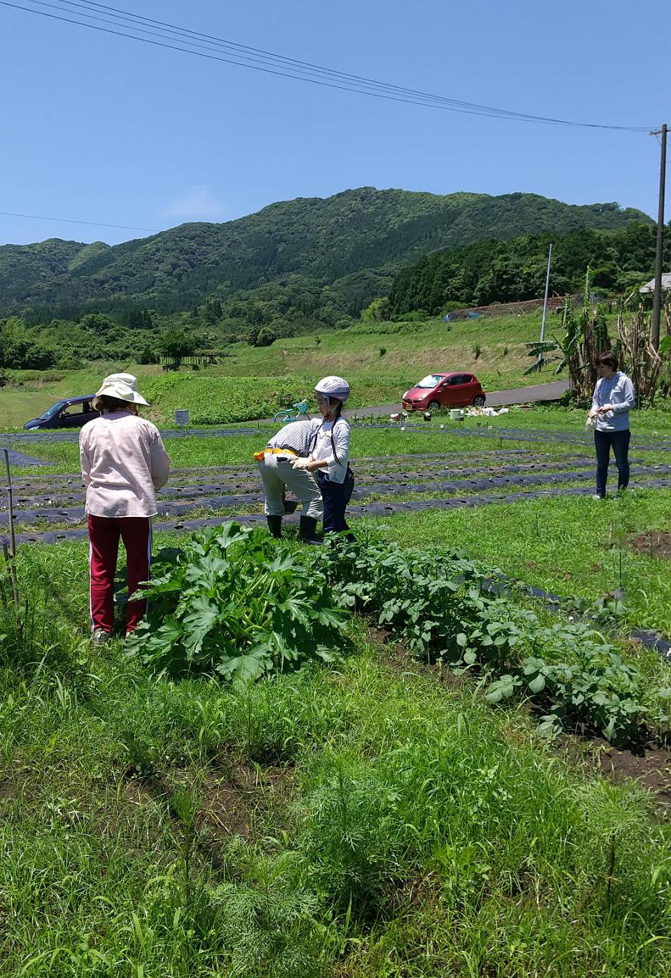 わくわく本舗の野菜畑